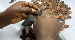 Ivory Coast cocoa farmers threaten to boycott industry sustainability programs