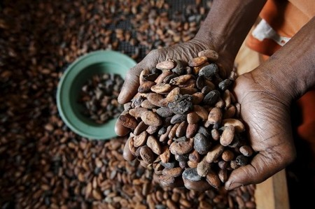 A worker holds cocoa beans at SAF CACAO, a export firm in San-Pedro