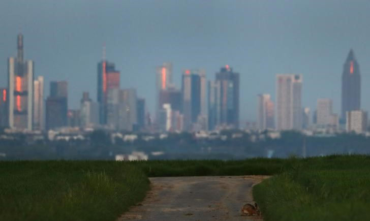 A rabbit sits on a track crossing fields facing the skyline of Frankfurt
