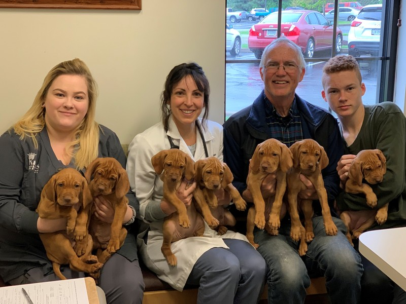 Destiny Brown Dr. Katie Buss and Kingsley family pose with puppies at the Kings Veterinary Hospital in Loveland Ohio