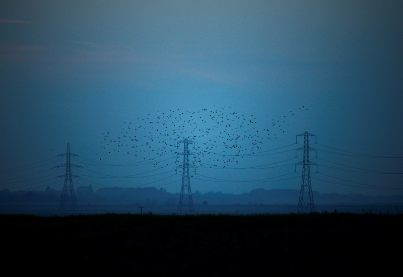 FILE PHOTO: Migrating starlings fly at dusk past electricity pylons silhouetted by the sunset of a clear autumn evening in the Kent countryside,  in Graveney, Britain