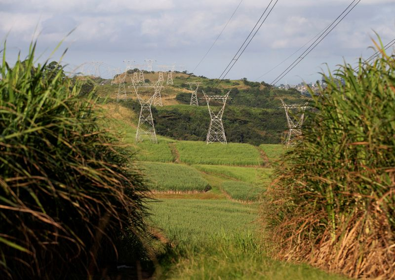 FILE PHOTO: Power lines supplying electricity by stated owned Eskom run through sugar cane fields on a Tongaat Hulett farm in Shongweni