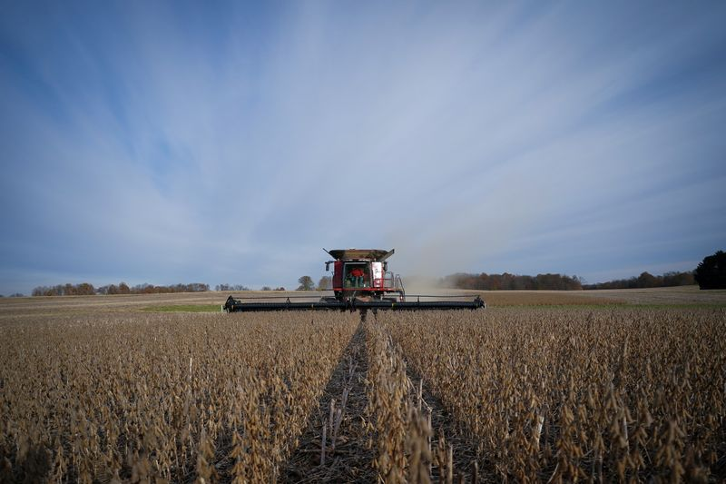 FILE PHOTO: Soybeans are harvested from a field on Hodgen Farm in Roachdale