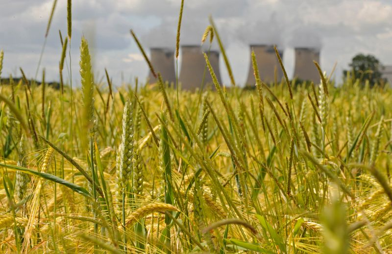 The chimneys of Drax Power Station are pictured through a field of wheat near Selby in northern England