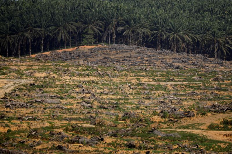 FILE PHOTO: Land that has been cleared is pictured at an oil palm plantation in Johor