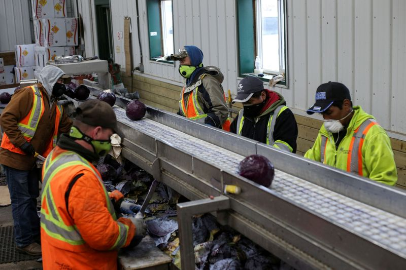 FILE PHOTO: Migrant workers wear masks and practice social distancing in Portage la Prairie