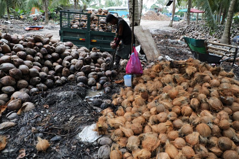 A worker peels coconuts at a coconut plantation in Sungai Besar