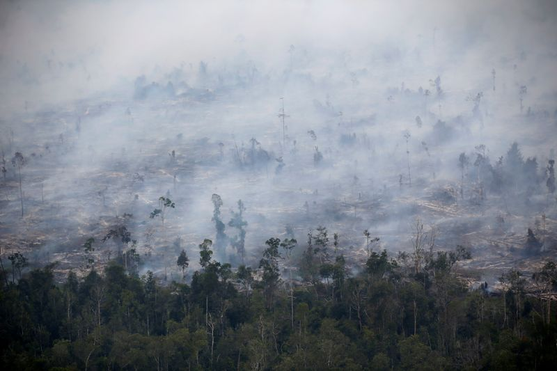 Smoke covers forest during fires in Kapuas regency near Palangka Raya in Central Kalimantan province