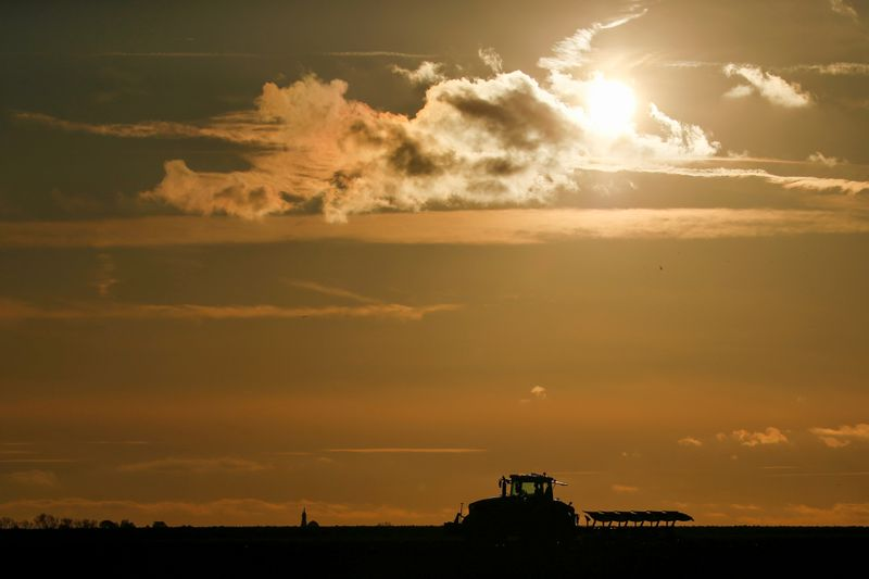 FILE PHOTO: A farmer plows his field during sunset, as he sows wheat in Havrincourt