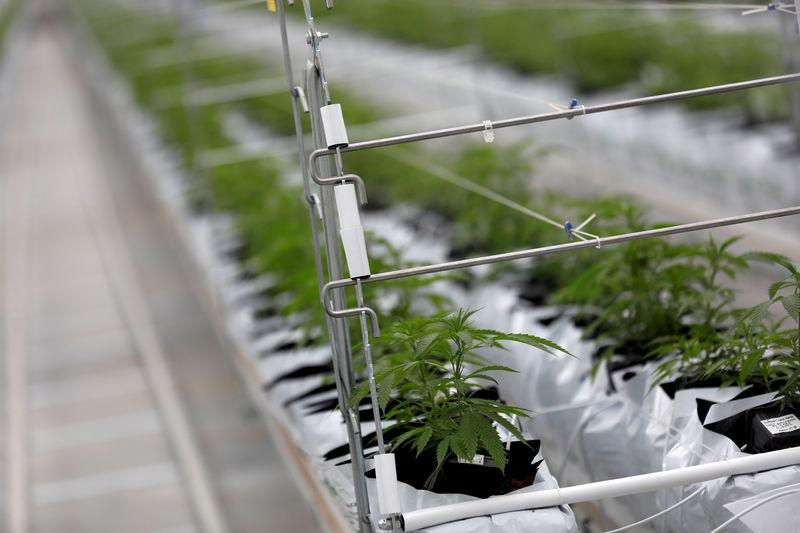 La ruée sur le cannabis se poursuit à Wall Street - Zonebourse.com